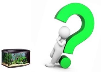 Проверь себя  Начальные вопросы по аквариуму